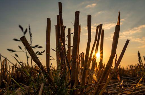 Die anhaltende Hitzewelle verursacht gigantische Ernteausfälle und wird für viele Bauern existenzbedrohend. Foto: dpa