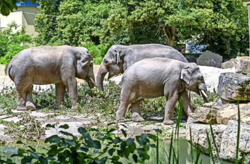 Im Zoo so aktiv wie in freier Wildbahn