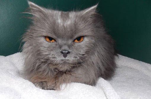 Wendy, die Katze aus dem Altkleidersack, ist jetzt im Tierheim in Stuttgart-Botnang. Hier soll sie sich erholen. Foto: Tierheim Stuttgart