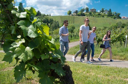 Das sind die schönsten Weinwanderwege rund um den Kessel