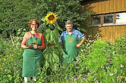 Marita und Martin Schäfer haben hinter ihrem Hof extra Blumen für ihre Bienen gesät. Foto: Otto-H. Häusser