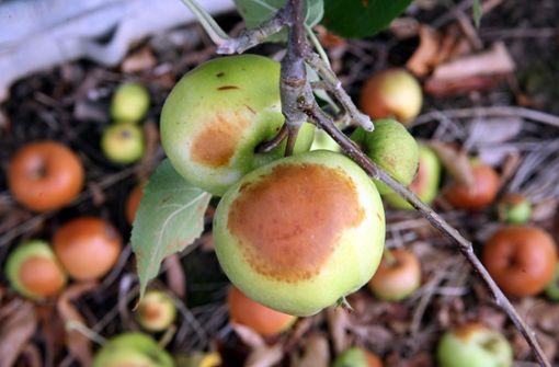 Hagelschutznetze schützen Äpfel vor Sonnenbrand