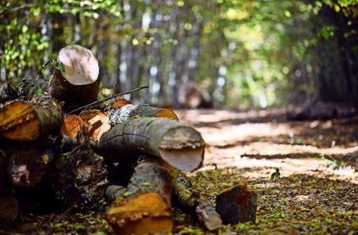 Schädlinge machen dem Wald zu schaffen