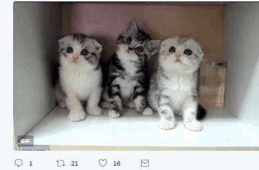 Katzenbilder fluten Twitter