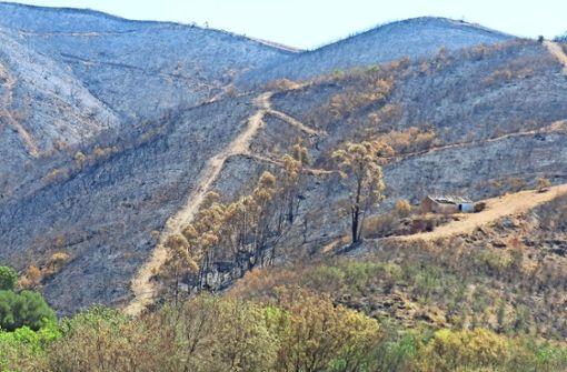 Die Waldbrände in Portugal haben Folgen bis nach Winnenden