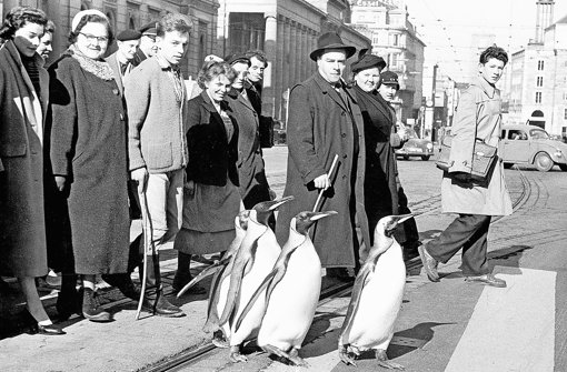 Vier Pinguine bummeln durch die Stadt