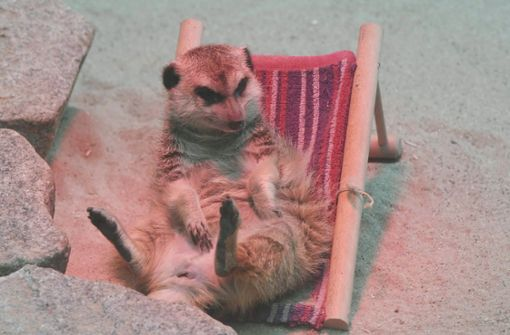 """Frau Erdfrau"" liebte ihren Liegestuhl"