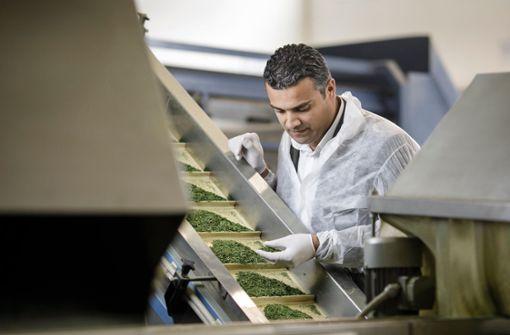 Mit Bio-Kräutern die Lücke im  Markt gefunden