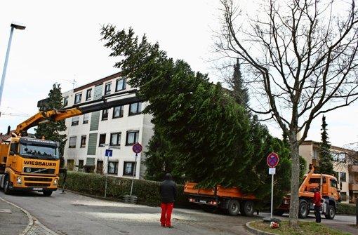 leinfelden echterdingen ein weihnachtsbaum auf r dern landkreis esslingen stuttgarter. Black Bedroom Furniture Sets. Home Design Ideas