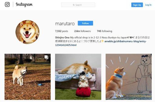Maru hat Millionen Fans auf Instagram. Foto: instagram.com/marutaro/Screenshot