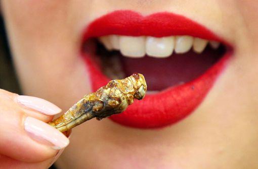 Die Landwirtschaft entdeckt Insekten für sich
