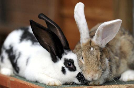 Unbekannte köpfen Kaninchen