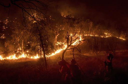 Das Feuer zerstört Zehntausende Hektar Wald. Foto: AP