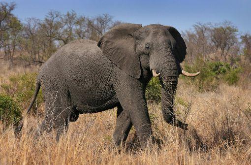 Elefant trampelt Großwildjäger tot