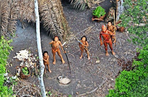 Brasiliens Indianer suchen Schutz im Wald