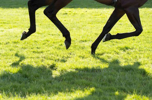 Dreijährige fällt von scheuendem Pferd und stirbt