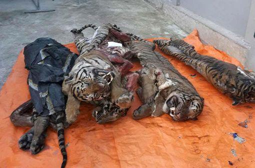 Polizei beschlagnahmt fünf tiefgefrorene Tiger