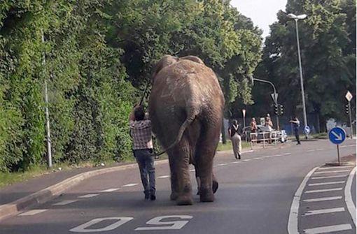 Ausgebüxter Zirkus-Elefant Kenia spaziert durch Wohnviertel