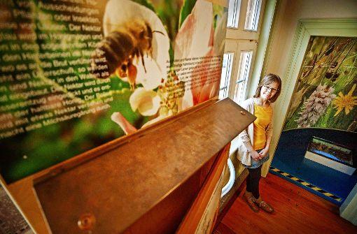 Bienenhilfe beginnt auf dem Balkon