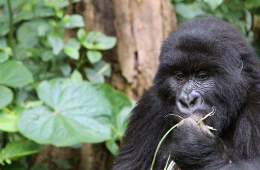 27000 Tierarten sind vom Aussterben bedroht
