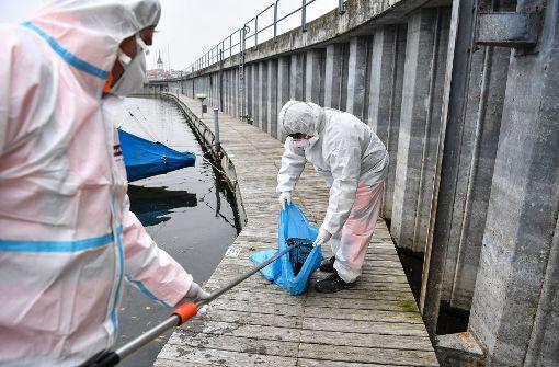 Geflügelhalter fürchten neuen Ausbruch der Krankheit