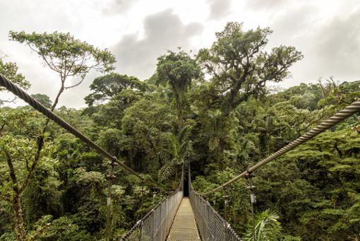 Abenteuer in Neuseeland: Mit dem Rad durch den Regenwald
