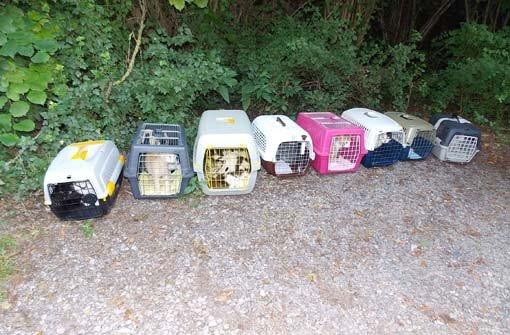 tierheim stuttgart 21 katzen vor dem tierheim in botnang ausgesetzt stuttgart stuttgarter. Black Bedroom Furniture Sets. Home Design Ideas