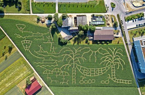 Das Maislabyrinth öffnet am Samstag