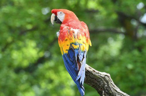 Papagei gibt Online-Bestellung bei Amazon auf