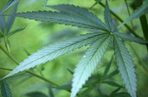 Cannabiszucht im Schlafzimmer