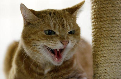 Katze verursacht schlimmen Unfall