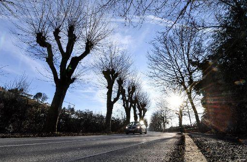 64 Bäume werden für die Landesgartenschau gefällt