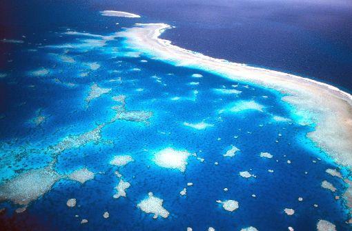 Klimawandel bedroht das Great Barrier Reef
