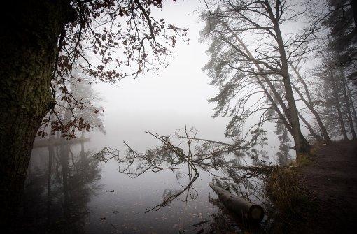 Neblige und frostige Aussichten
