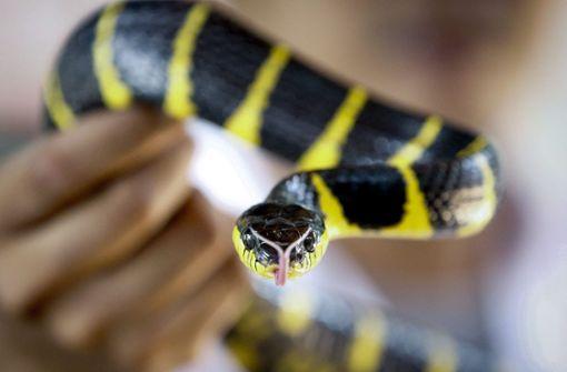 Paar mit Schlange randaliert in Imbiss – drei Polizisten verletzt