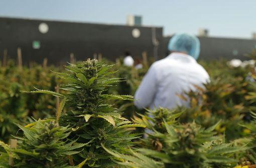 Uruguay startet Marihuana-Verkauf