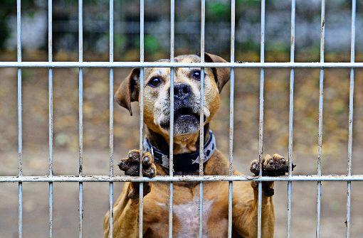 Vorsitzender betrügt Tierschutzverein
