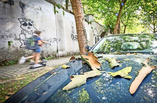 Die Platanen, hier in der Etzelstraße, werfen ihr Kleid ab. Es ist zu eng. Foto: Lichtgut/Julian Rettig