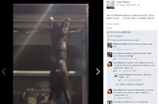 Pub-Besucher retten Katze