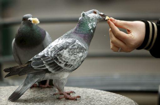 Taubenfütterer greift 61-Jährigen an