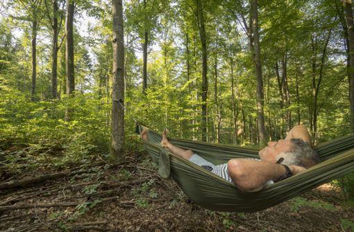 Philippe Clédon genießt den Wald – gemütlich aus der Hängematte heraus. Foto: factum/Weise