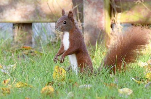 Eichhörnchen verursacht Unfall