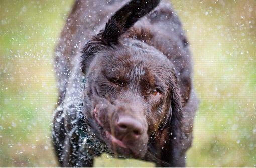 Hund rettet seinen Kumpel aus starker Strömung