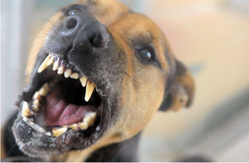 Hund fällt Reh an