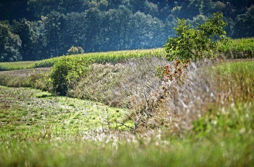Eingriff in  Landschaft: Kritikerin meldet sich zu Wort