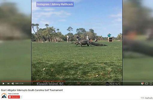 Riesiger Alligator unterbricht Golf-Turnier