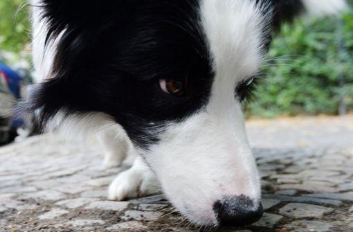 Hund verursacht Auffahrunfall mit sechs Fahrzeugen