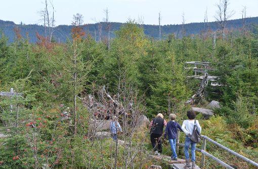 Urige Wälder und neue Ideen