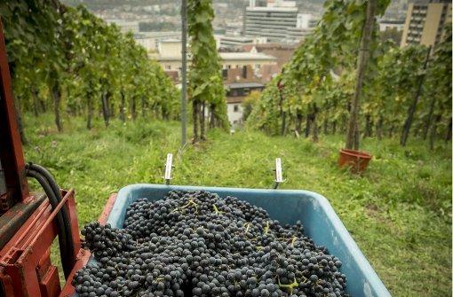 Ein neues Kapitel für das Weingut