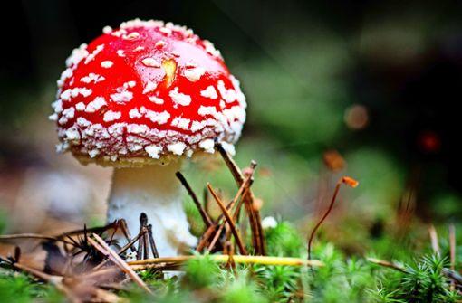 Was man über Pilze wissen muss